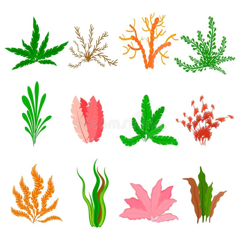 在白色背景设置的水下的海草传染媒介 海植物和水生海洋海藻 类型水族馆的汇集 库存例证