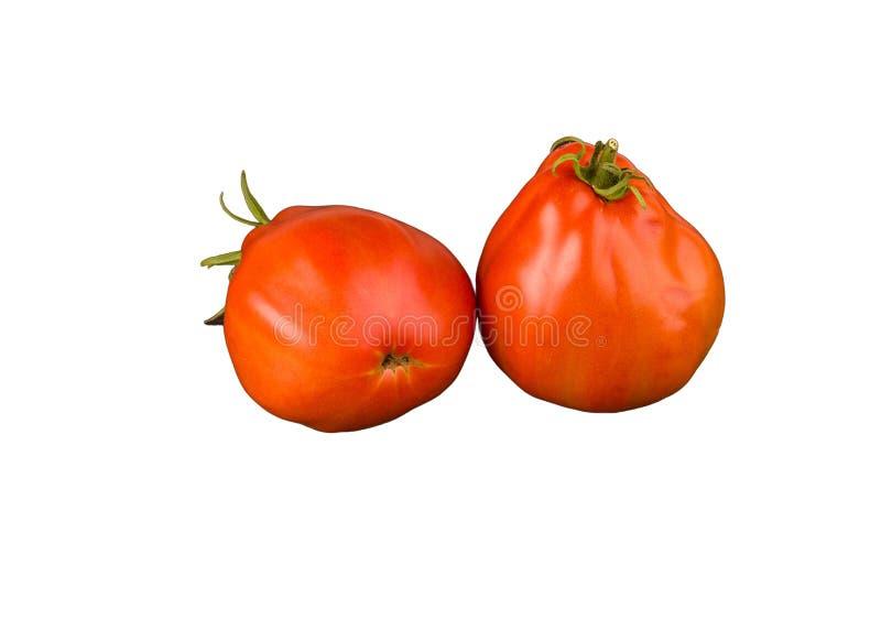 在白色背景隔绝的两个成熟蕃茄 整个菜 免版税图库摄影