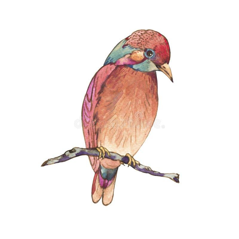在白色背景隔绝的五颜六色的水彩鸟,自然例证 向量例证