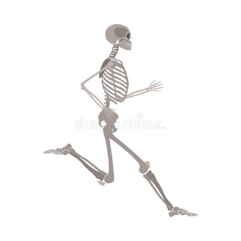 在白色背景隔绝的人体最基本的跑的平的传染媒介 向量例证