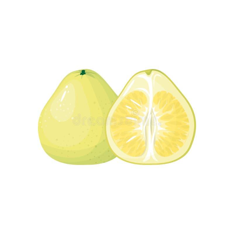 在白色背景隔绝的动画片新鲜的柚 向量例证