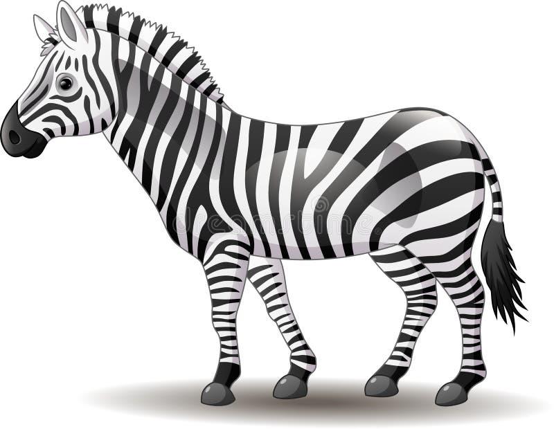 在白色背景隔绝的动画片滑稽斑马摆在 库存例证