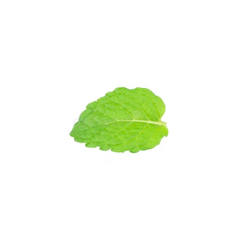 在白色背景隔绝的唯一薄荷的叶子 免版税库存照片