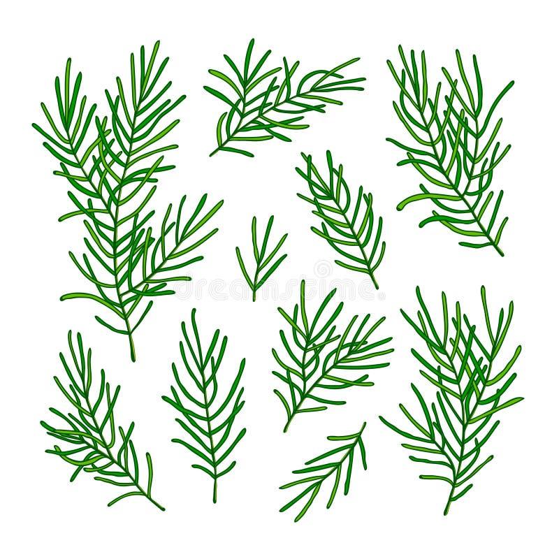在白色背景隔绝的圣诞树的汇集绿色分支 也corel凹道例证向量 向量例证