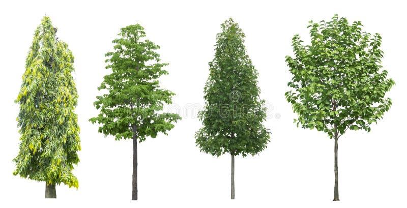 在白色背景隔绝的套树 库存照片