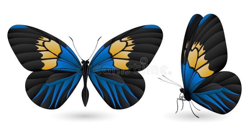 在白色背景隔绝的套蝴蝶 库存例证