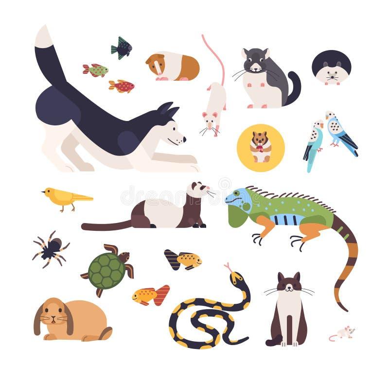 在白色背景隔绝的宠物的汇集 套逗人喜爱的动画片家畜-哺乳动物,鸟,鱼,啮齿目动物 皇族释放例证