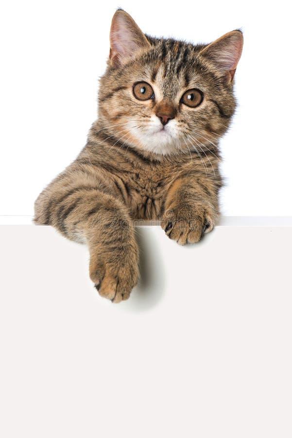 在白色背景隔绝的小猫看在墙壁 免版税库存照片
