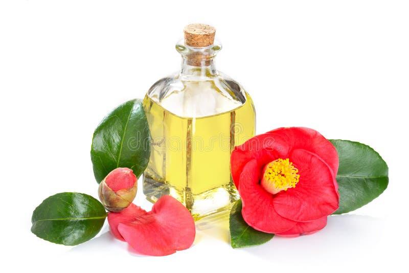 在白色背景隔绝的山茶花油 Cammellia japonica花和油玻璃瓶 库存图片