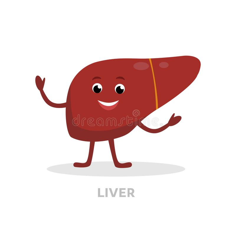 在白色背景隔绝的强的健康肝脏漫画人物 愉快的肝脏象传染媒介平的设计 健康器官 向量例证