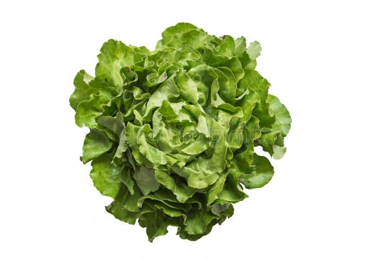 在白色背景隔绝的成熟有机蔬菜沙拉罗马 库存图片