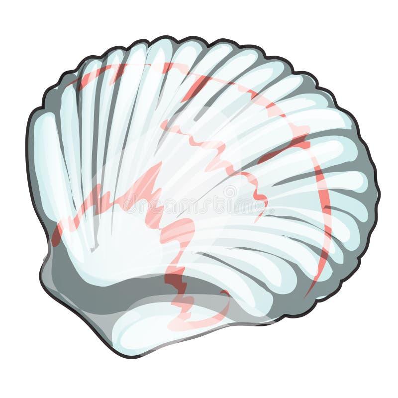 在白色背景隔绝的扇贝壳 海鲜和纤巧 传染媒介动画片特写镜头例证 向量例证