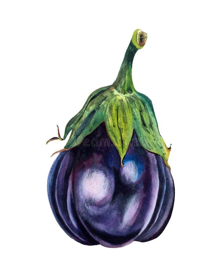 在白色背景隔绝的手拉的水彩例证 美丽的茄子 Vegeterian健康食物 玻色子 库存例证