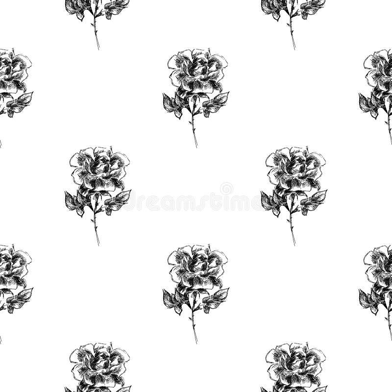 在白色背景隔绝的抽象玫瑰色花的无缝的徒手画的样式 传染媒介花卉例证 现代逗人喜爱的乱画 向量例证