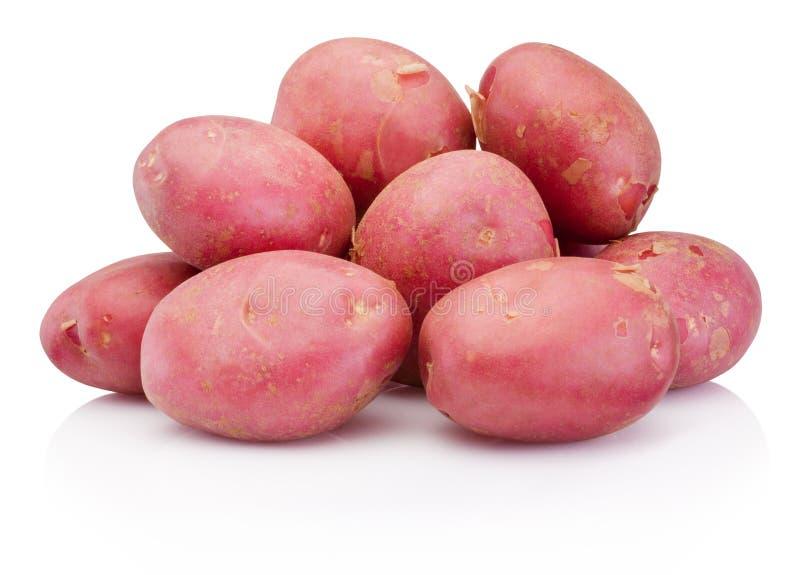 在白色背景隔绝的新的红色土豆 库存图片
