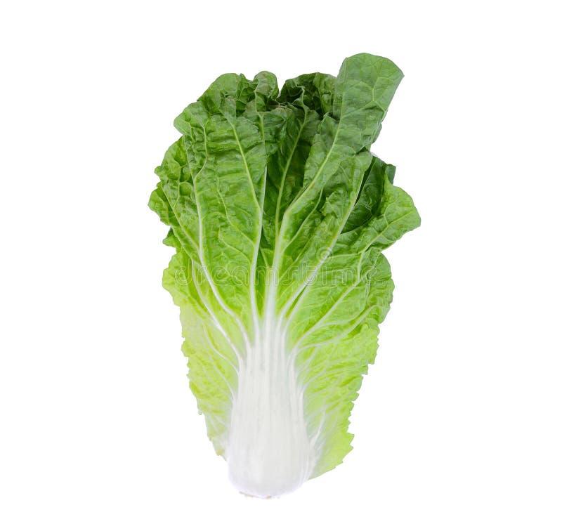 在白色背景隔绝的新鲜的大白菜,顶视图 免版税库存照片