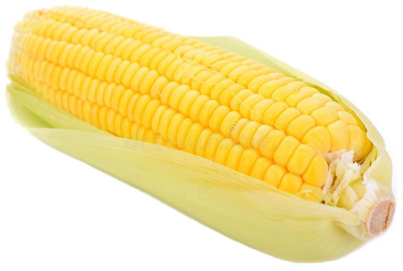 在白色背景隔绝的新鲜的甜玉米 免版税图库摄影