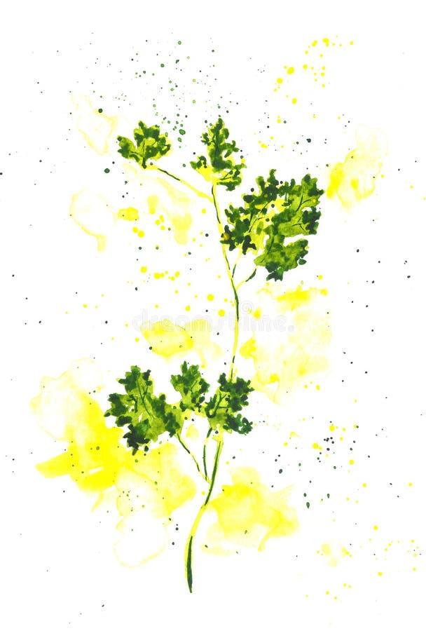 在白色背景隔绝的新鲜的绿色荷兰芹叶子,顶视图素食主义者 皇族释放例证