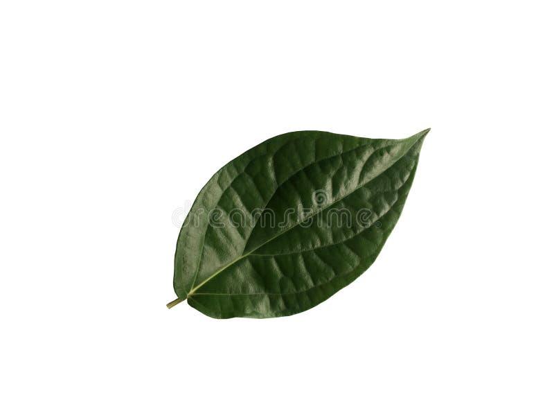 在白色背景隔绝的新鲜的绿色蒋酱之叶叶子 库存图片