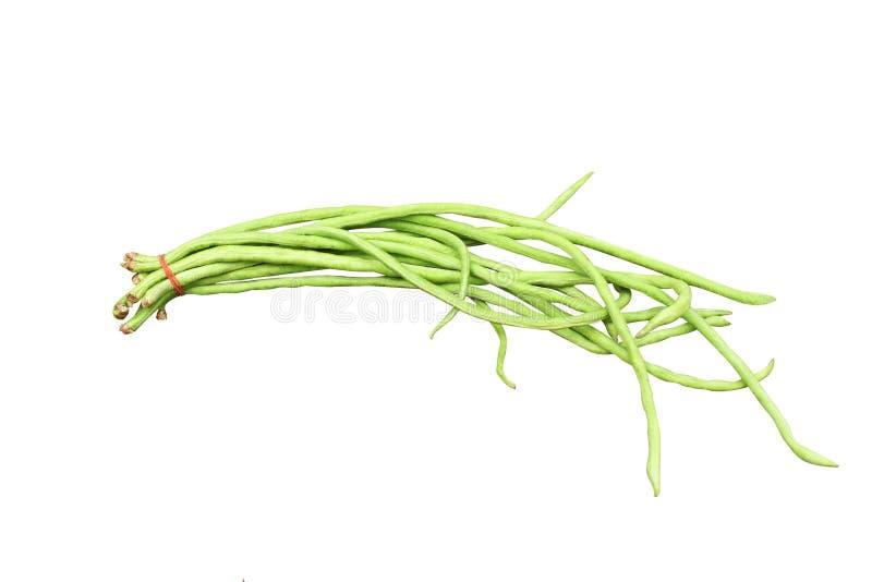 在白色背景隔绝的新鲜的绿色yardlong豆 图库摄影
