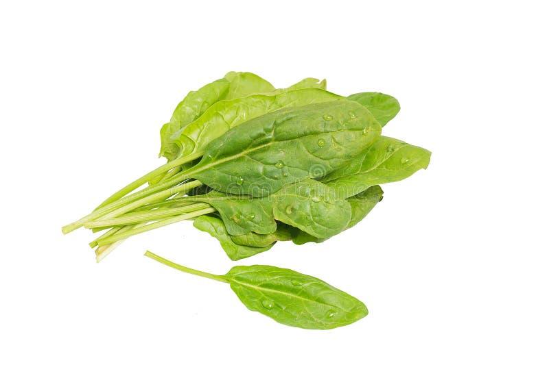 在白色背景隔绝的新鲜的菠菜叶子 免版税库存照片