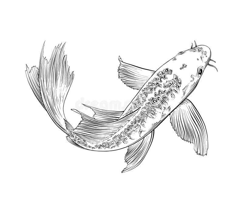 在白色背景隔绝的日本鲤鱼鱼手拉的剪影  详细的葡萄酒蚀刻图画 向量例证