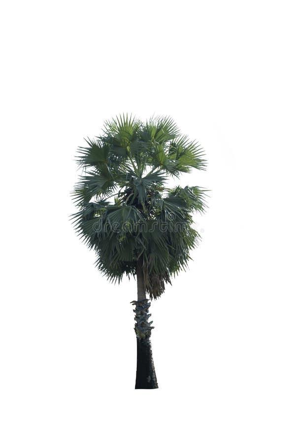 在白色背景隔绝的树,与裁减路线 图库摄影