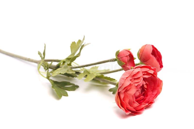 在白色背景隔绝的桃红色人造花 皇族释放例证