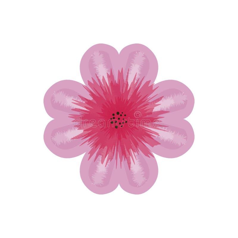 在白色背景隔绝的桃红色大丽花花,被设计作为明信片Eps10向量图形和例证 向量例证