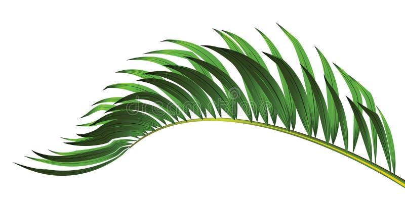 在白色背景隔绝的棕榈树绿色叶子 皇族释放例证
