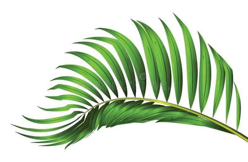 在背景方案隔绝的棕榈树特色产业绿色小镇家具叶子v背景白色图片