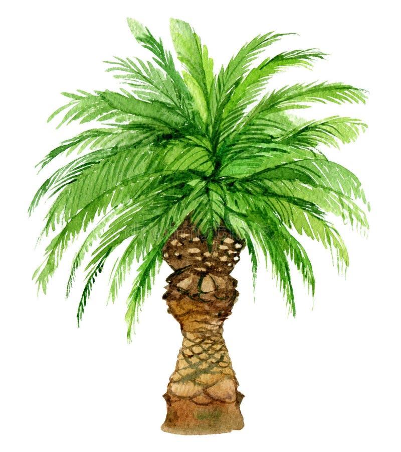 在白色背景隔绝的棕榈树,水彩 库存例证