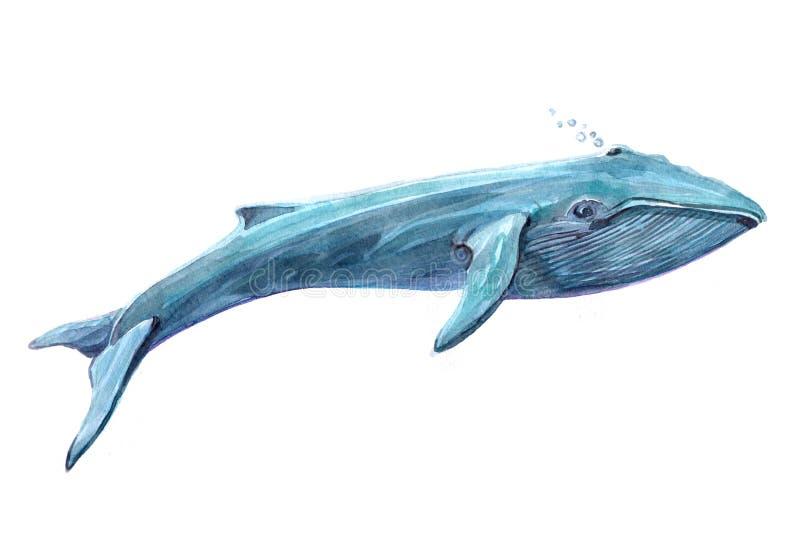 在白色背景隔绝的水彩唯一水族馆鱼动物 向量例证