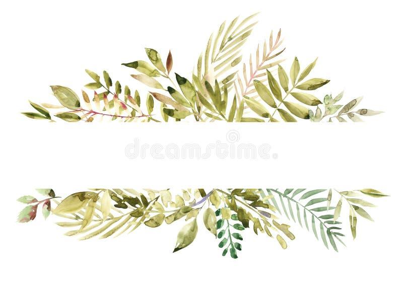 在白色背景隔绝的水彩手画绿色花卉横幅 卡片的,婚姻的邀请医治草本 向量例证
