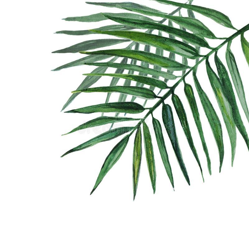 在白色背景隔绝的水彩棕榈叶 库存例证