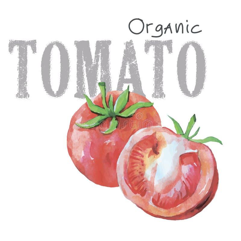 在白色背景隔绝的水彩菜有机传染媒介蕃茄 图库摄影