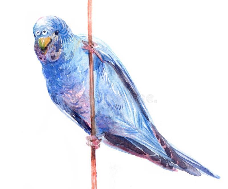在白色背景隔绝的水彩蓝色鹦鹉鸟动物例证 向量例证