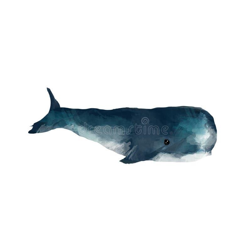 在白色背景隔绝的水彩鲸鱼手画例证 现实水下的动物艺术 数字现代艺术性 向量例证