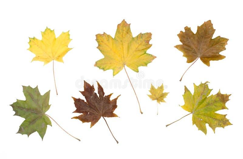 在白色背景隔绝的汇集套五颜六色的秋天下落的叶子 免版税库存图片