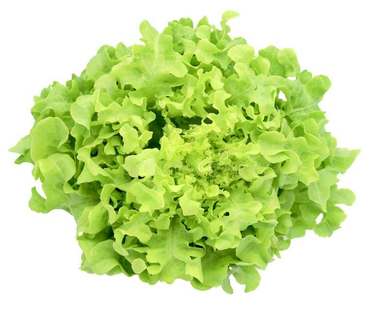 在白色背景隔绝的沙拉绿色frillice卷心莴苣的有机蔬菜 库存照片