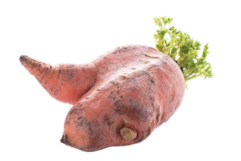 在白色背景隔绝的滑稽的形状的红萝卜 免版税图库摄影