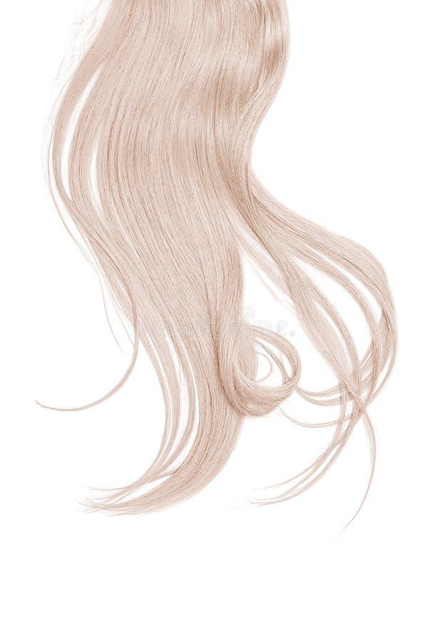 在白色背景隔绝的灰色头发 长的被弄乱的马尾辫 免版税库存图片
