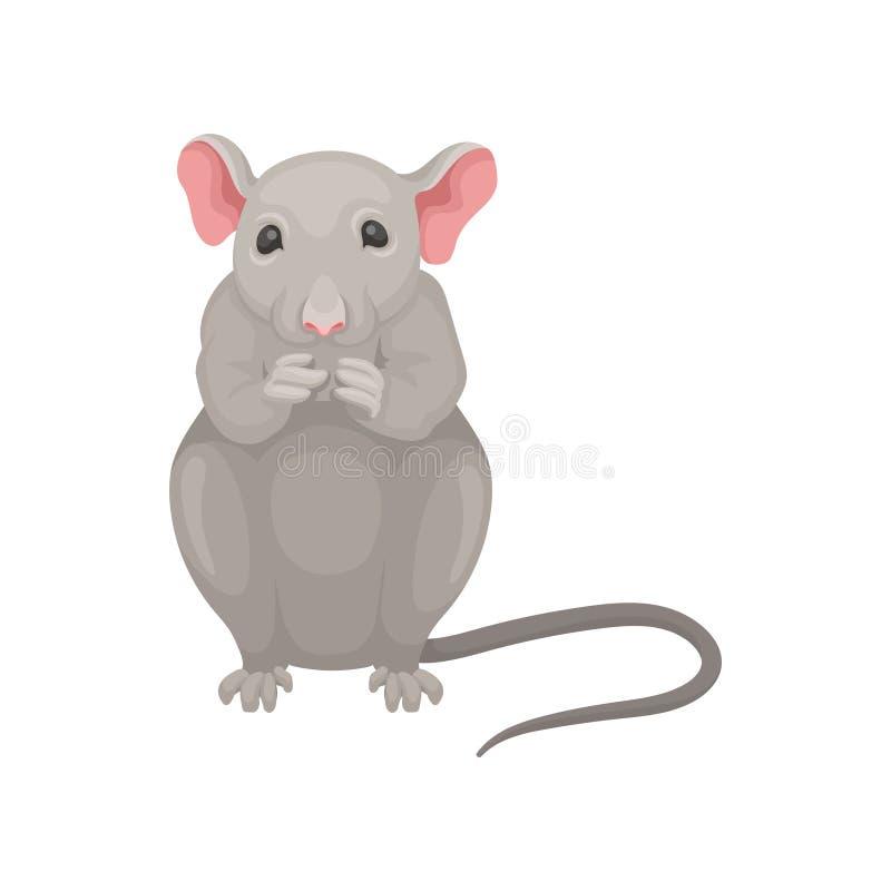 在白色背景隔绝的灰色老鼠开会 正面图 与大桃红色耳朵和长尾巴的小啮齿目动物 平的传染媒介 皇族释放例证