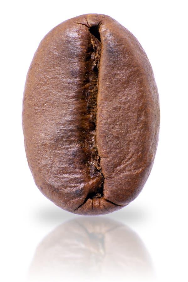 在白色背景隔绝的烤咖啡豆宏指令  免版税库存照片