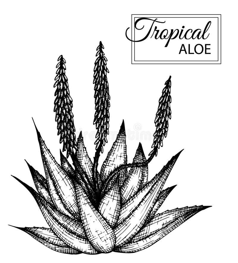 在白色背景隔绝的热带花的传染媒介例证 向量例证
