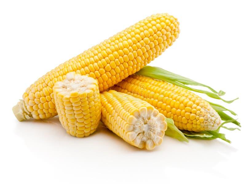 在白色背景隔绝的玉米穗图片