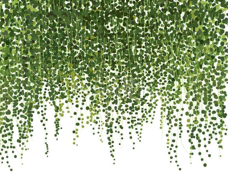 在白色背景隔绝的现实传染媒介常春藤植物 库存照片