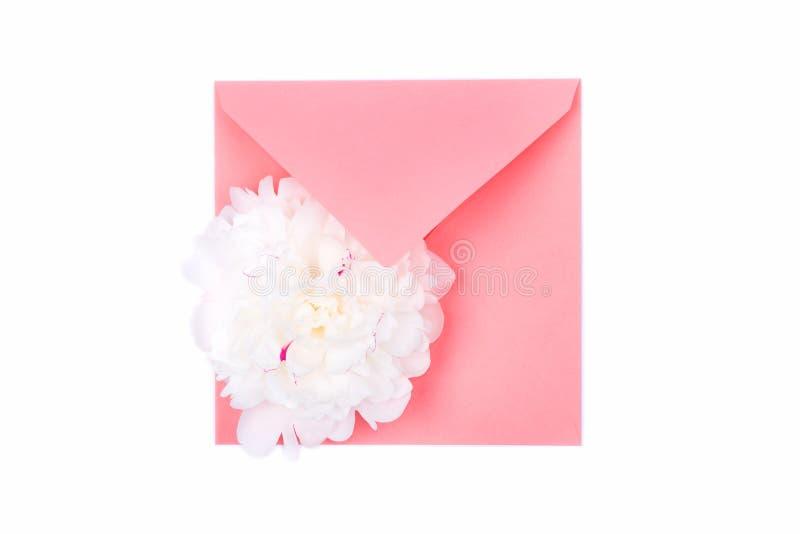 在白色背景隔绝的珊瑚颜色信封的美好的嫩白色牡丹头状花序 图库摄影
