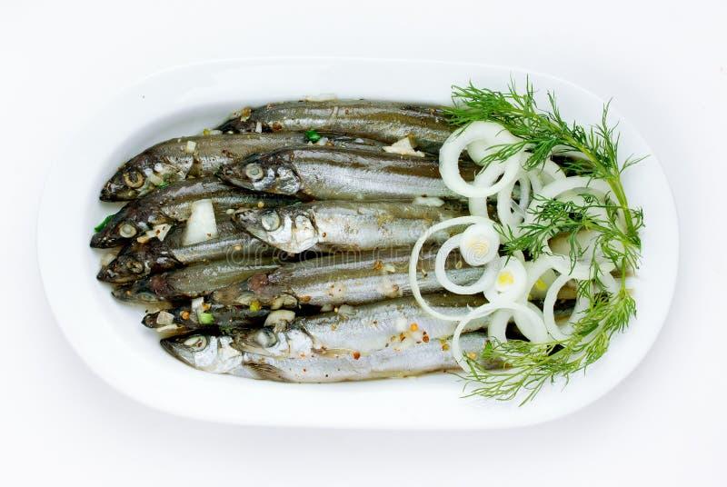 在白色背景隔绝的白色板材的咸鱼 免版税图库摄影