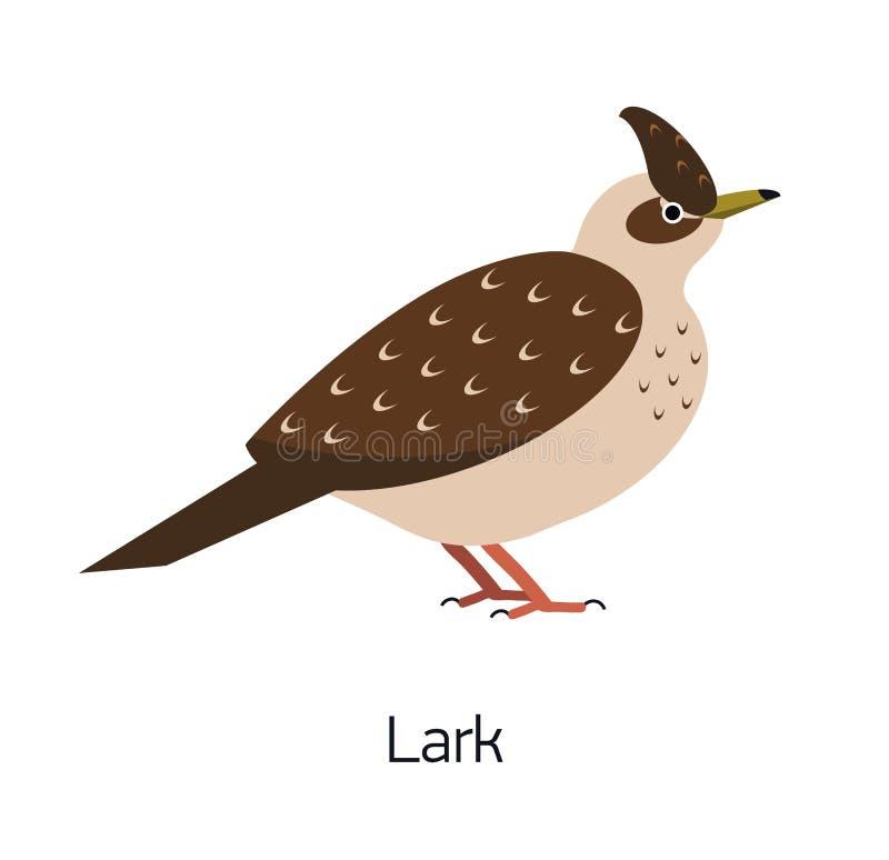 在白色背景隔绝的百灵 美丽的森林燕雀类鸟,可爱的森林地歌手 滑稽的小鸟 公开承认 皇族释放例证
